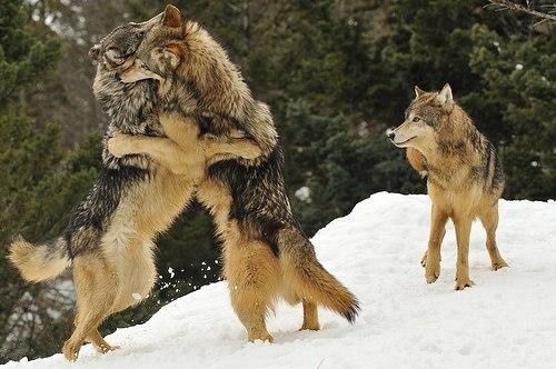 u_volka_slojnaya_sudba